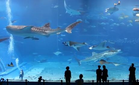 marrazoak aquariumean