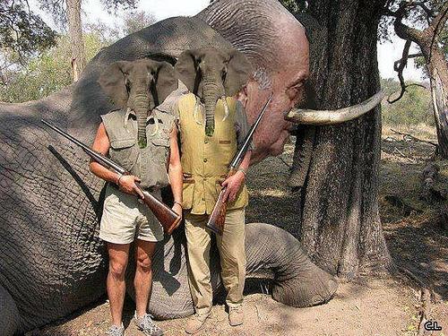 elefanborboi