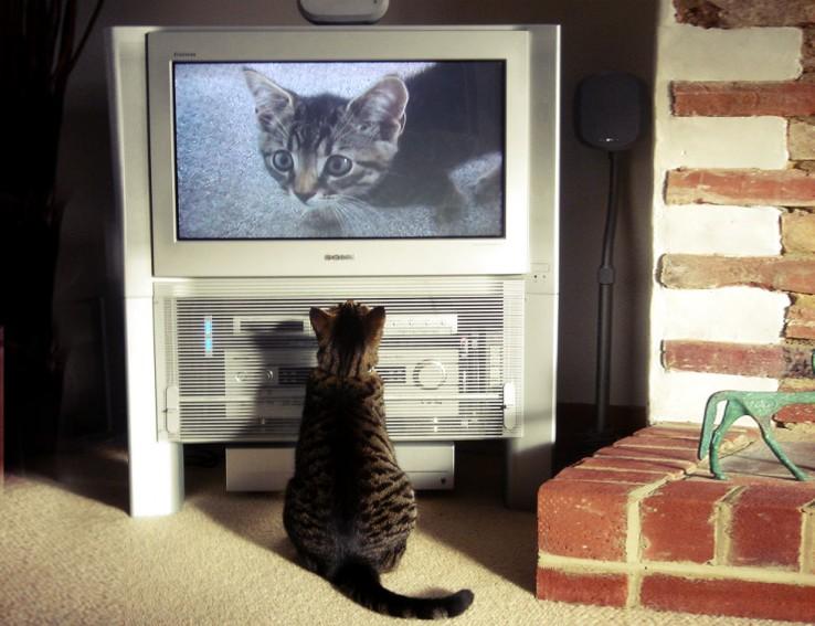 Katua telebista aurrean