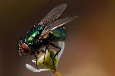 Animaliei buruzko 10 uste, EZ sinestekoak