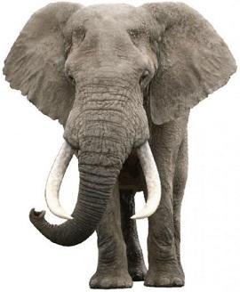 Elefantea Ikusi