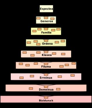 Elebidunen taxonomia