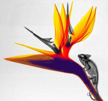 Natura, X-izpietatik (argazki galeria)