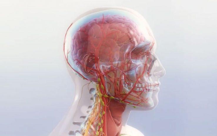 Bihotza eta anatomia, ikusi eta ikasi