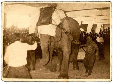 Apustua: elefantea idi eta Txikon Larrañaga