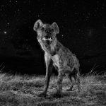 Mundu naturala. Will Burrard-Lucas. Erresuma Batua