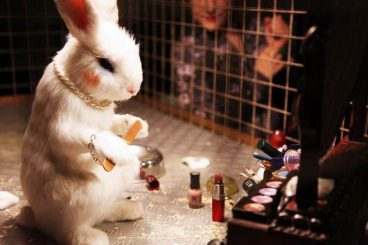 Animalietan testaturiko kosmetika
