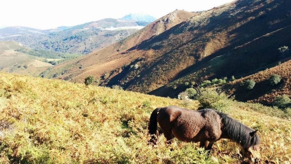 Eskualdeko Parke Naturala
