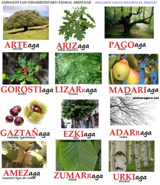 Euskal abizenak, toponimian eta inguruaren azalpenean oinarrituak. -AGA bukaeraz