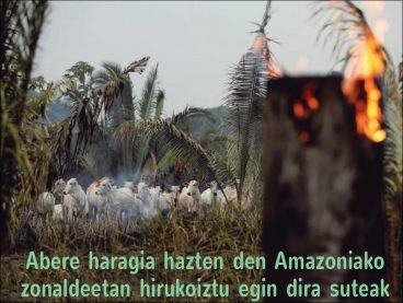 Abere haragia hazten den Amazoniako zonaldeetan hirukoiztu egin dira suteak