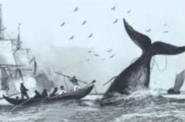 Martin Sopite baleazale ziburutarra