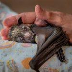 Wildlife Photographer of the Year lehiaketako argazki batzuk