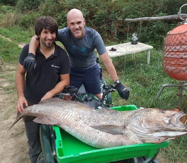 39,5 kiloko korbina